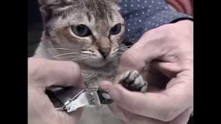 Documentaire Les chats d'Expo