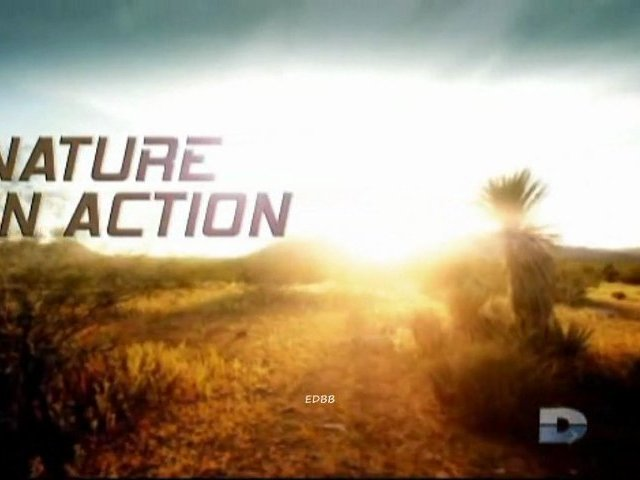 Documentaire La nature en action