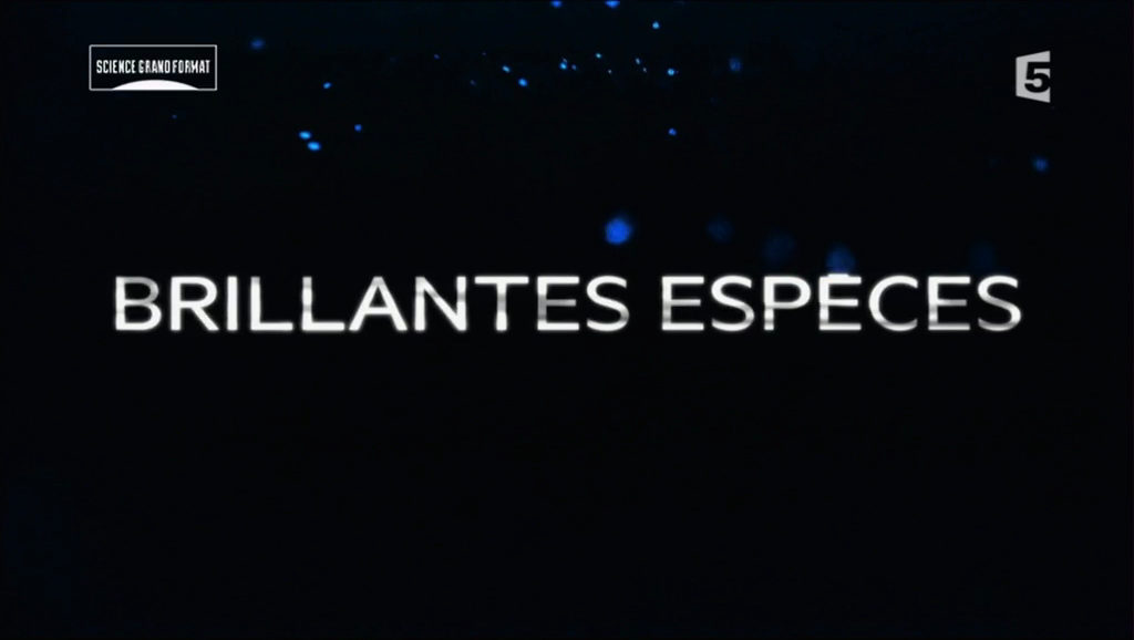 Documentaire Brillantes espèces