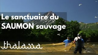 Documentaire Le sanctuaire du saumon sauvage