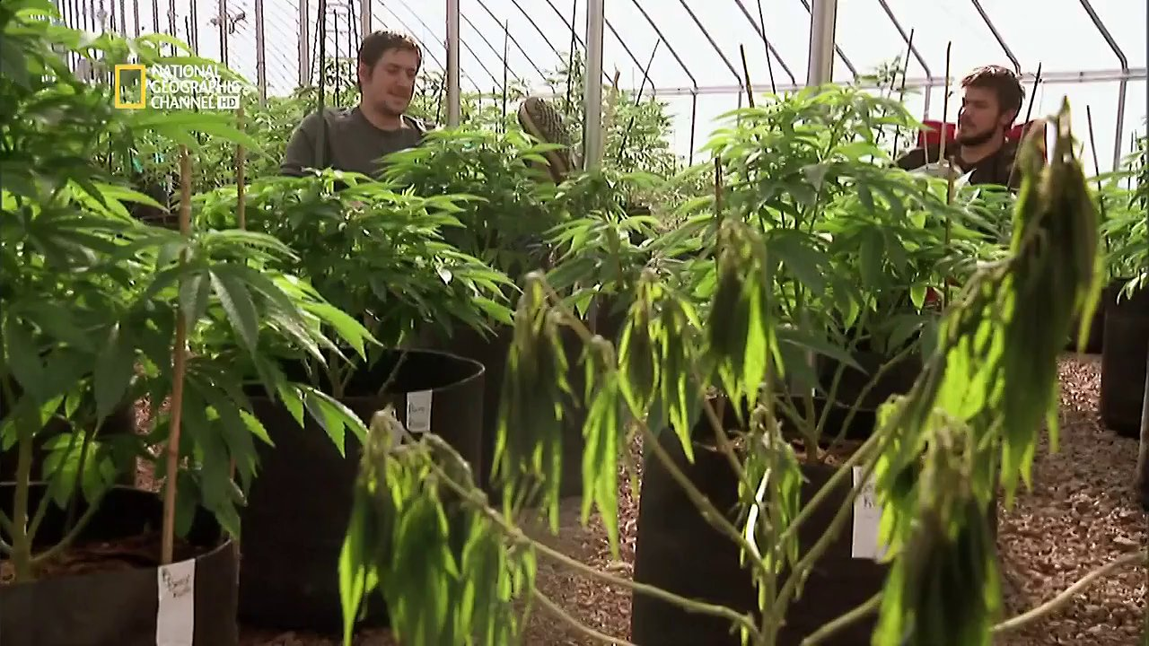 Documentaire American Weed – E07 – Le jour du scrutin