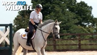 Documentaire Neptune Collonges : le champion de courses d'obstacles se reconvertit dans le dressage