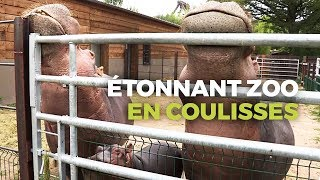 Documentaire Zoo de PAL : dans les coulisses du zoo le plus étonnant de France