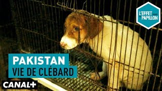 Documentaire Pakistan : vie de clébard