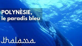 Documentaire Le paradis bleu