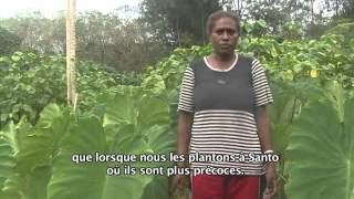 Documentaire Nos racines (1/2)