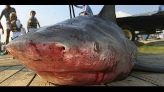 Documentaire Pêche du requin