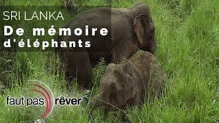 Documentaire Sri Lanka – de mémoire d'éléphants