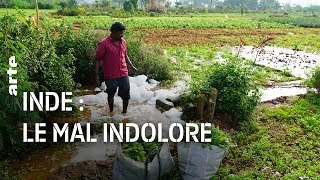 Inde : pollution, le mal indolore