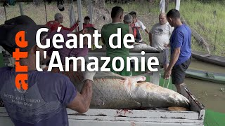 Documentaire Sauver le plus grand poisson d'Amazonie : l'arapaïma