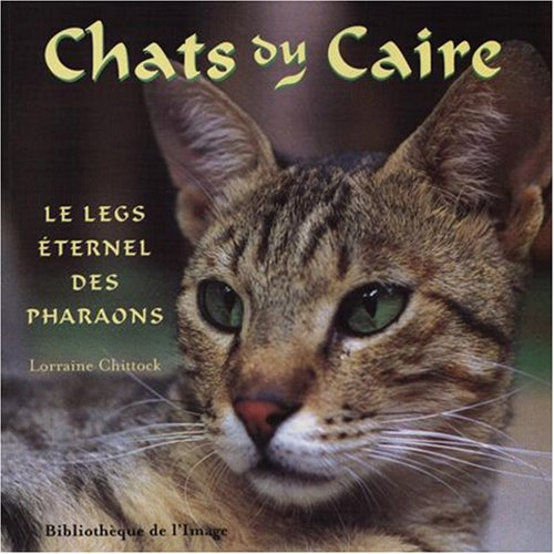 Chats du Caire - Legs éternel des pharaons