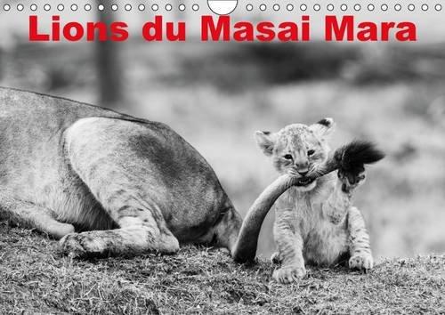 Lions du Masai Mara : Photos N&B de lions libres et sauvages. Calendrier mural A4 horizontal 2016