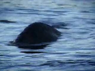 Documentaire Le mystère du Loch Ness