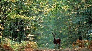 Documentaire A la découverte de la Forêt