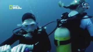 Documentaire Attaques de requins l'expérience