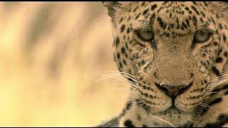 Documentaire L'île aux léopards