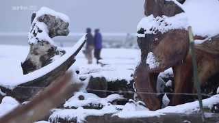 Documentaire L'ours polaire une espèce menacée