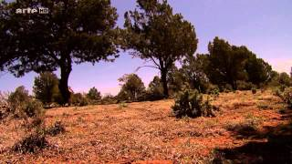 Documentaire La danse des Navajos