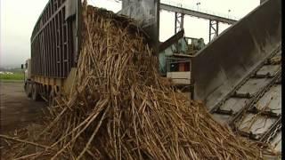 Documentaire C'est pas sorcier – La canne à sucre