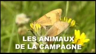 Documentaire Les animaux de la campagne