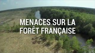 Documentaire Menaces sur la forêt française