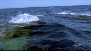 Documentaire Le seigneur des océans