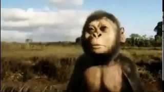 Documentaire L'évolution de l'espèce humaine