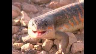 Documentaire Les petites créatures du désert