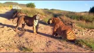Documentaire Animal Fight Club