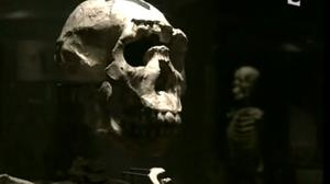Documentaire La théorie de Darwin
