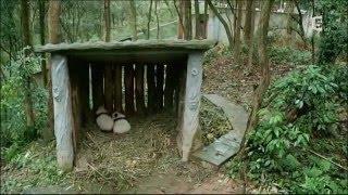 Documentaire La vallée des pandas