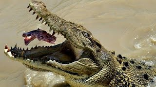 Documentaire Dans la caverne des crocodiles