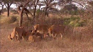 Documentaire La savane d'Afrique
