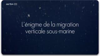 Documentaire L'énigme de la migration verticale sous-marine