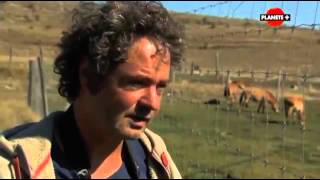 Documentaire Miraculés de l'évolution : les chevaux qui voulaient un roi