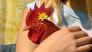 Documentaire Les animaux de la ferme : mon poulailler adoré