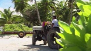 Documentaire Le vin de l'atoll : les vignerons de Rangiroa