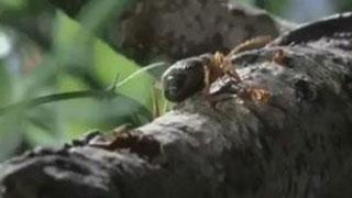 Documentaire L'aventure de la vie, les insectes
