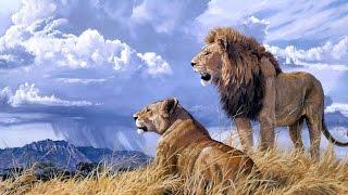 Documentaire Lions de Namibie, les rois du désert