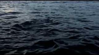 Documentaire La nuit des requins