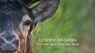 Documentaire Le brame des Landes