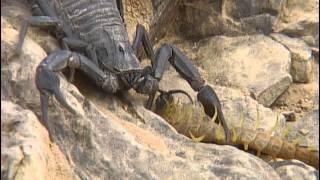 Documentaire Animaux du désert : les petites créatures