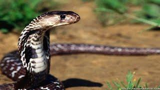Documentaire Animaux du désert, les reptiles