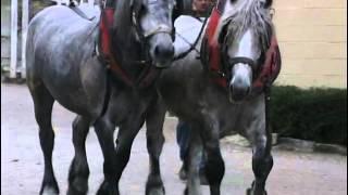 Documentaire Les chevaux de trait – Au cœur de la tradition