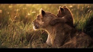 Documentaire Africa, le Serengeti
