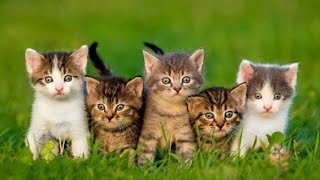 Documentaire Du chaton au chat
