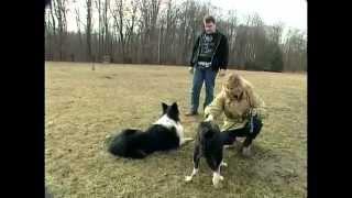Documentaire Les chiens de chasse
