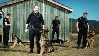 Documentaire Ces chiens au service de l'homme