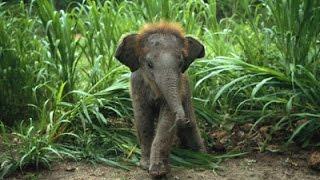 Documentaire Les bébés animaux
