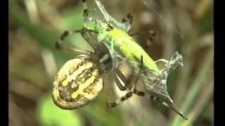 Documentaire Les araignées